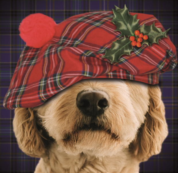 Dog In Tartan Hat
